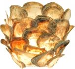 Muschelwandleuchte Escondido